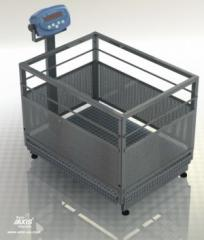 Scales for weighing of pigs of BDU300C-0608X