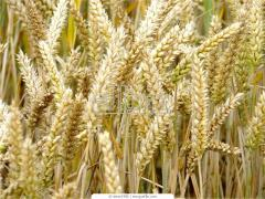 Trade in grain and commercial crops