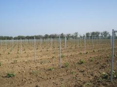 Столбики для виноградников, виноградные столбики,