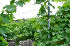 Support for vineyards - columns
