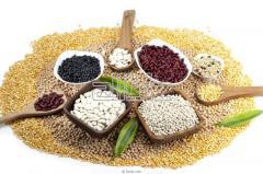 Семена зерновых культур купить Одесса