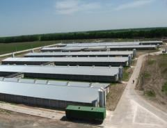 Buildings quickly erected