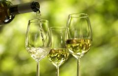Виноматериал столовый сухой белый