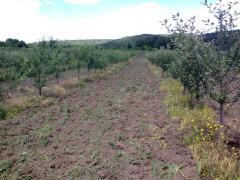 Сад яблоневый 3,5 Га, Черкасская обл