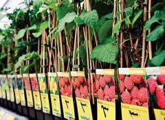 Выращивание, размножение и реализация саженцев