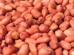 Peanut crude