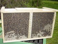 Пчелопакеты,купить,продать,опт,розница