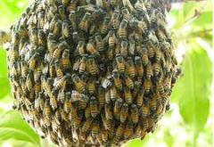 Bee families to buy, sell, wholesale, retail