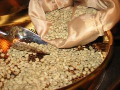 Зеленый кофе Robusta India Cherry AAA