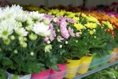 Цветы в асортименте