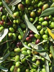 Olives are tinned
