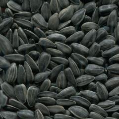 Sunflower seeds, Luhansk Region.