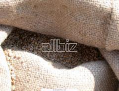 Все виды зерновых и технических культур оптом