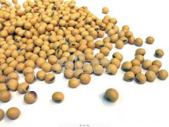 The soy textured cultivation of grain and
