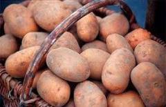 Семена картофеля, семена, саженцы, семена,