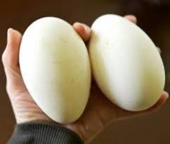 Eggs duck incubatory wholesale price Kiev