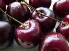 Sweet cherry saplings high-quality