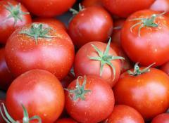 |Помидоры| томаты| тепличные|