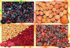 Gooseberry (quick-frozen)
