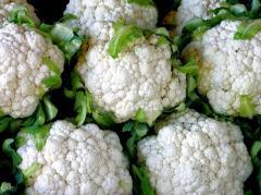 Cauliflower, from producers of Ukraine. Sale,