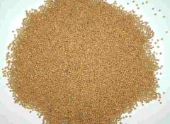 Mustard seeds wholesale