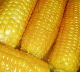 Seeds for sowing maize hybrids