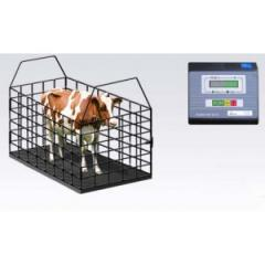Scales for animals, Scales for weighing of cattle,