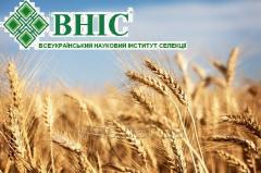 Семена озимой пшеницы Артаплот Суперэлита, 1 репродукция