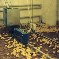 Equipment for floor cultivation of broilers...