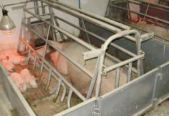 Equipment for cultivation and keeping of pigs