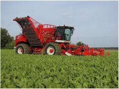 Combines beet-harvesting Ukrainian and foreign