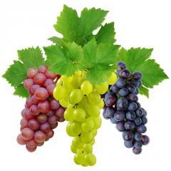 Масло Виноградной косточки, Виноградное масло