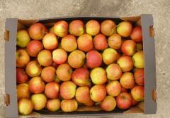 Яблоки свежие   Купить яблоки опт. Яблоки свежие,
