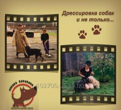 Training of dogs Kiev!!