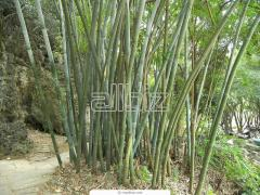 The bamboo is decorative
