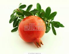 Trees frui