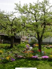Trees decorative