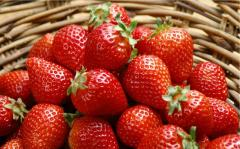 Albion strawberry