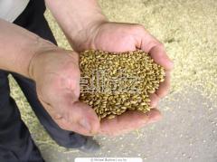 Шнеки зерновые