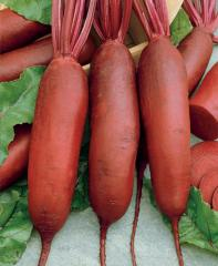 """Seeds of beet of table, Polish selection: """"Opolsky"""", """"Rival"""", contractual price."""