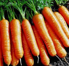 """Продам семена моркови """"Флакийского"""