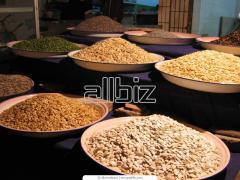Продажа : зерно, просо, травы, лён, сорго, отруби.