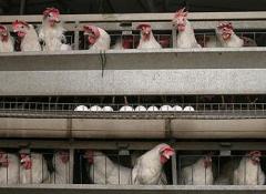 Комбикорм для кур несушек, БВМД 40% для кур