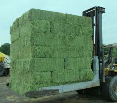Hay lyutserny|polivny hay of a lucerne Ukraine