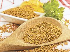 Горчица желтая зерна