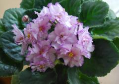 EK-violet Spring water color (Korshunova)