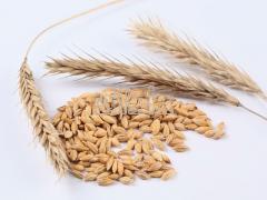 Крупа пшеничная озимая, крупа пшеничная озимая со склада, крупа пшеничная озимая оптом, крупа пшеничная озимая от производителя