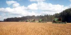 Культуры кормовые зерновые.