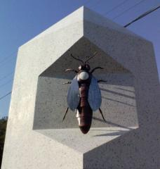 Матка пчелиная карпатской породы Вучкоского типа
