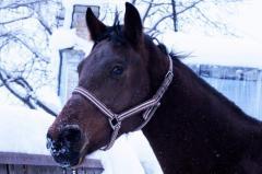 Louisiana, Horses